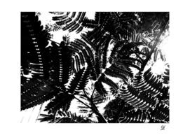 Mimosa Ferns 6 ~ B&W