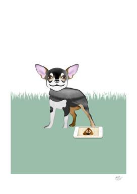 Oopsie Poopsie (Chihuahua)