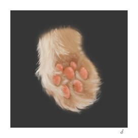 Soft Cat Paw