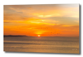 Sunset on the atlantic beach with orange sun and birds