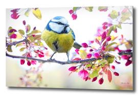 Romantic Flower Blossom with Blue Tit Spring Bird
