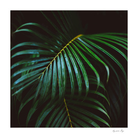 Green Tropical Palm Leaf