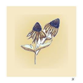 Purple Cone Flower ~ Sepia