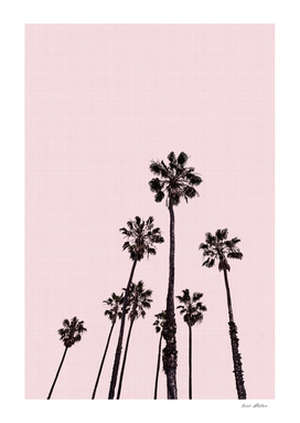 Palm Trees Pink
