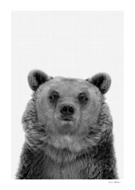 Bear Portrait