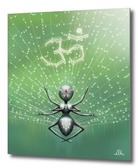 Blissful Spider