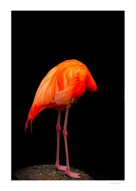 Weird Flamingo