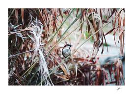 Bird on a Plant