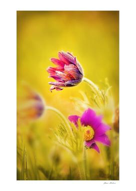 Spring Romantic Flower