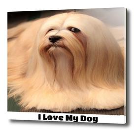 I love my Lhasa Apso Dog Breed