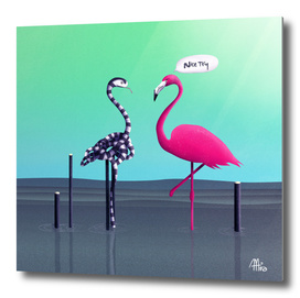Nice Try, Flamingo!