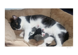 Kat&Kittens