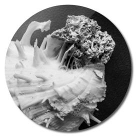 Spiny Oyster No.2