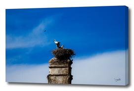 Storks on the nest.