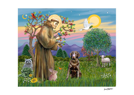 Saint Francis Blesses a Chocolate Lab