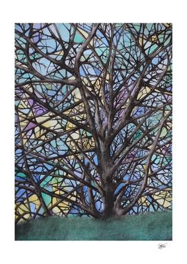 Tree - Declination 1
