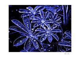 Raindrops In Blue II