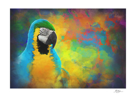 Parrot Splotches