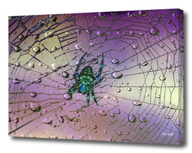 Raindrops-Spider Web