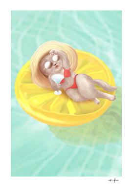 Cat Floating On Lemon Pool Float