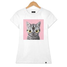 Ggamsun the cat