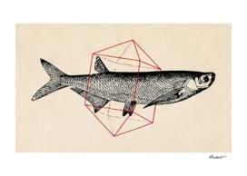 Fish in Geometrics II