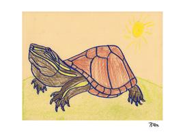 Stinkpot Turtle