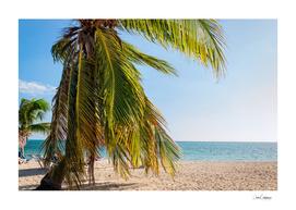 Tropical palm tree at Ancon Beach
