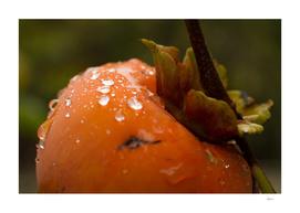 Persimmon Drops