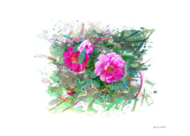 Wild Roses, Dog's Roses - Pink Flowers - Watercolor, Splash