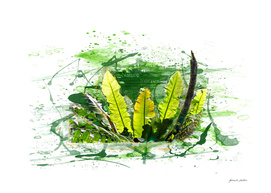 Fern Leaves, Plants - Tropical Jungle - Watercolors, Splash