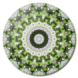 Green and White Rhododendron Mandala