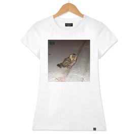 Long-eared owl - Banstolac DSCF1766_D