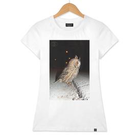 Long-eared owl - Banstolac DSCF1768_D