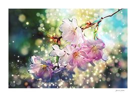Cherry, Apple Blossom - Spring