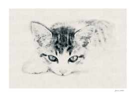 Young Cat - Carcoal, Pencil Drawing