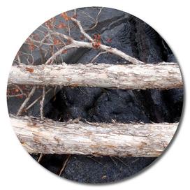 Lava Field Driftwood
