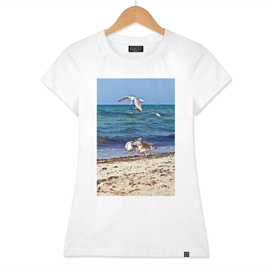 Seagulls screaming