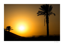 Golden Andalusian sunset with silhouette palm trees