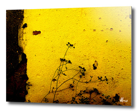 Minimal Flora  - Yellow wall and flowers