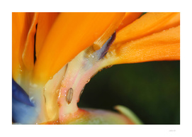 Orange Flower with Tiny Leaf Photo