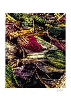 Dried Wild Flowers