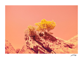Tree on Mars? by #Bizzartino