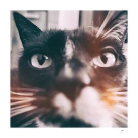 photo cat Jagoda