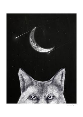 Fox of the night