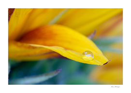 Macro drop on the sunflower petal