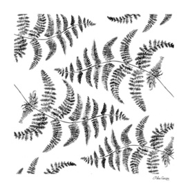 Fern pattern black and white