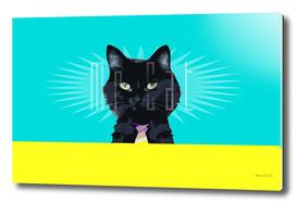 Mr. Cat in Color