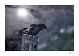 Raven Twilight