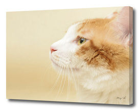 profile of the cat